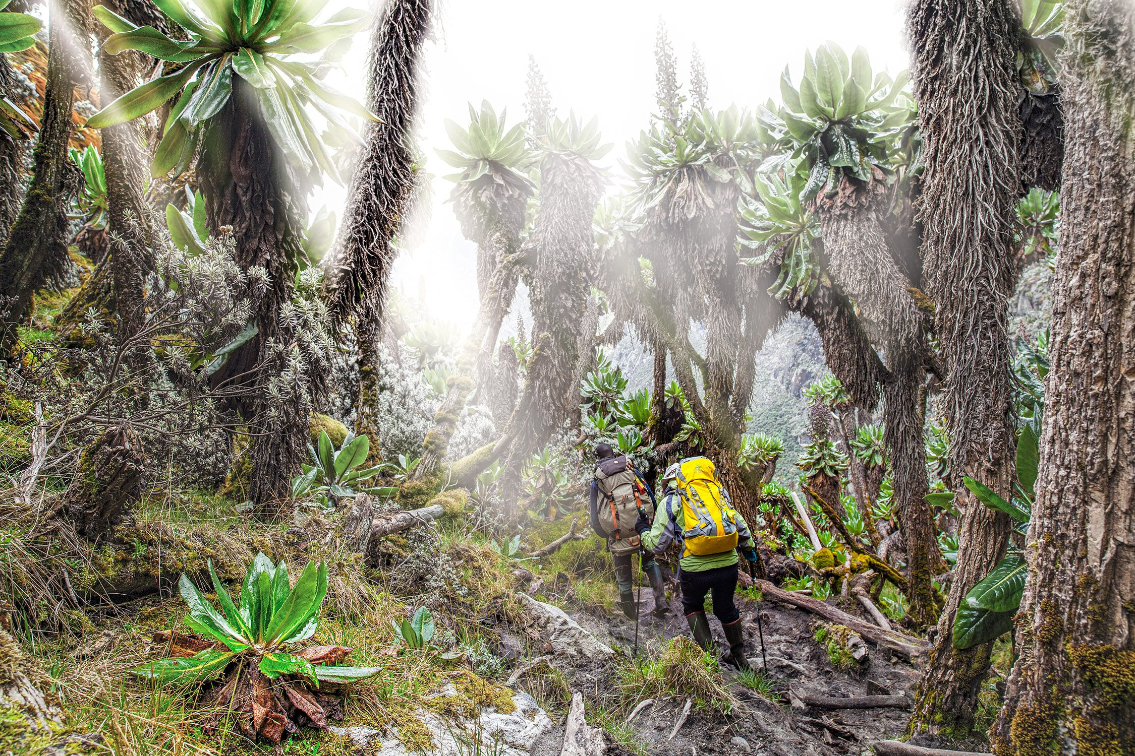 Ruwenzori expedition